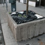 bentley-ball-outside-the-planter-boxes-08
