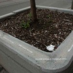 holy-blue-outside-the-planter-boxes-05